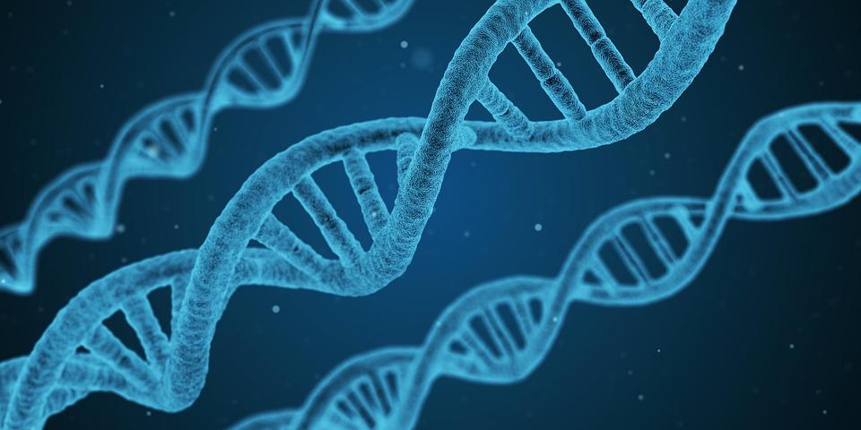 Phycocyanine illustrée par la photo de brins d'ADN bleutés