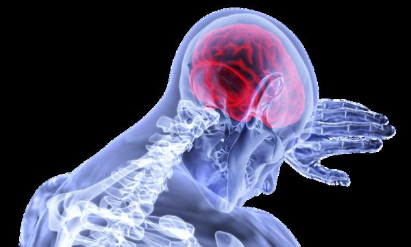 Photo d'un organisme qui concentre les nutriments dans le cerveau