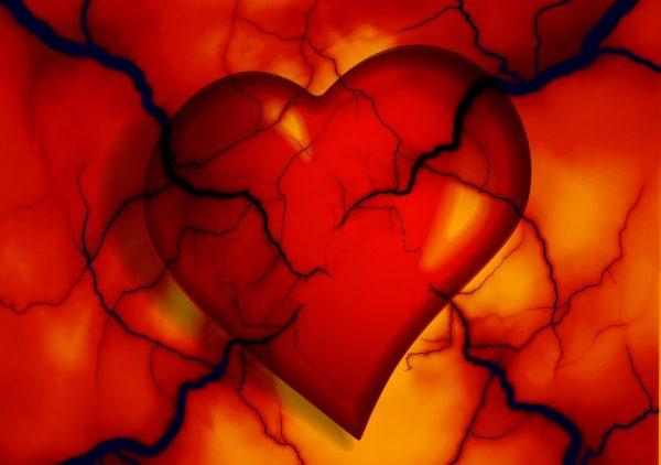 Représentation d'un coeur souffrant d'une maladie cardiovasculaire qui pourrait bénéficier du moringa