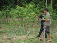 Raphael à la découverte du moringa bio et de ses bienfaits à la ferme de moringa bio Dihé au Cambodge