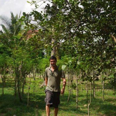 Raphael Hun marche dans la plantation de moringa