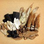Photo d'une variété d'adaptogènes posés sur une table : du ginseng, du ganodermo, du reichi