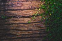photo de plantes environnement bio comment le choisir