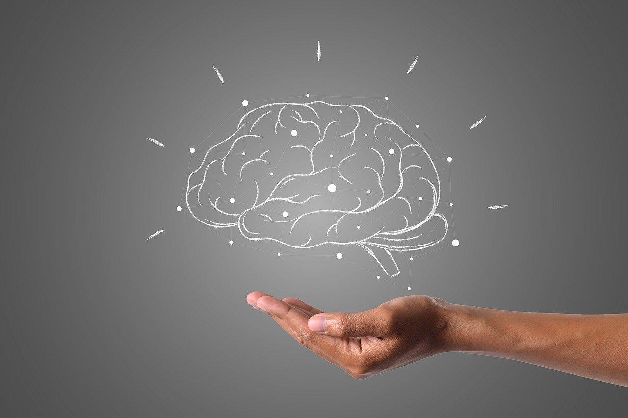 Entretenir les fonctions cognitives du cerveau avec le ginseng rouge de corée